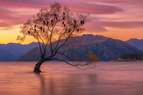 longexposure sunset newzealand sky lake tree water landscape vibrant vivid lakeside willow nz otago lakeview wanaka cloudscape singletree lakewanaka sunsetsunrise willowtree solitarytree mountainrange thatwanakatree