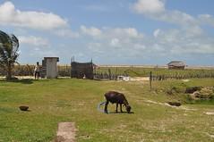 Bany exterior (i ovelles, conills, gallines, porcs, etc.)