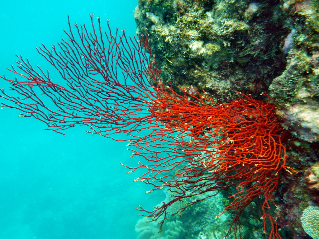 Great Barrier Reef, Eddy Reef off Mission Beach
