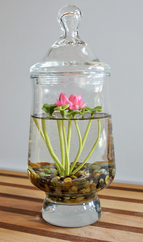 Mini Lotus Water Lily Terrarium In Recycled Glass A Tiny 3 Flickr
