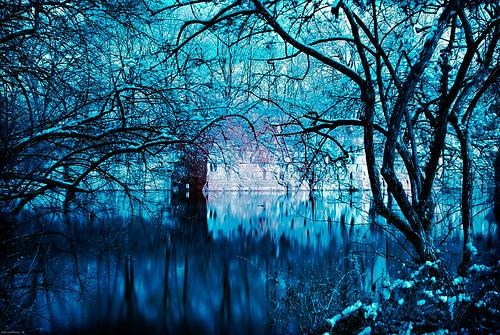 winter snow nature march kentucky ky louisville cementary cavehill