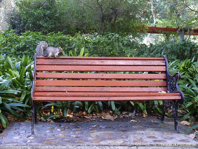 Company´s Gardens-Ciudad del Cabo