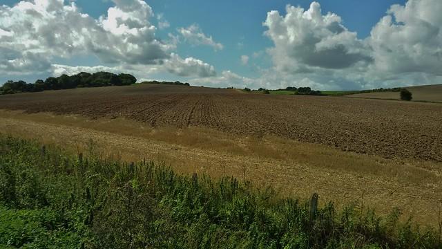 Berkshire Downs, England - August 2015