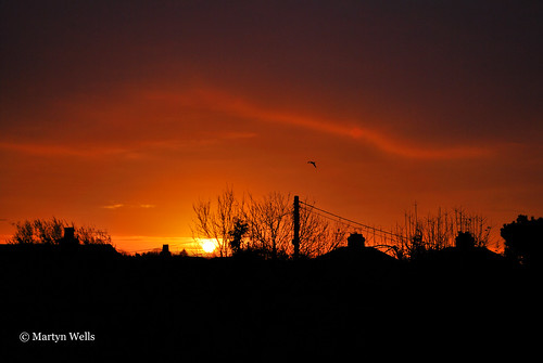 nikon d60 3652015 365 365the2015edition day337365 day337 3dec15 essex sunrise braintree braintreeessex silhouette landscape landscapes england bird clouds theamateursgroup unlimitedphotos