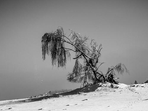 tears of snow | by hans eder1