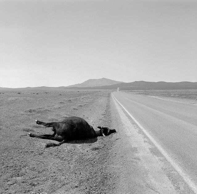 Dead Cow, near Winnemucca, Nevada