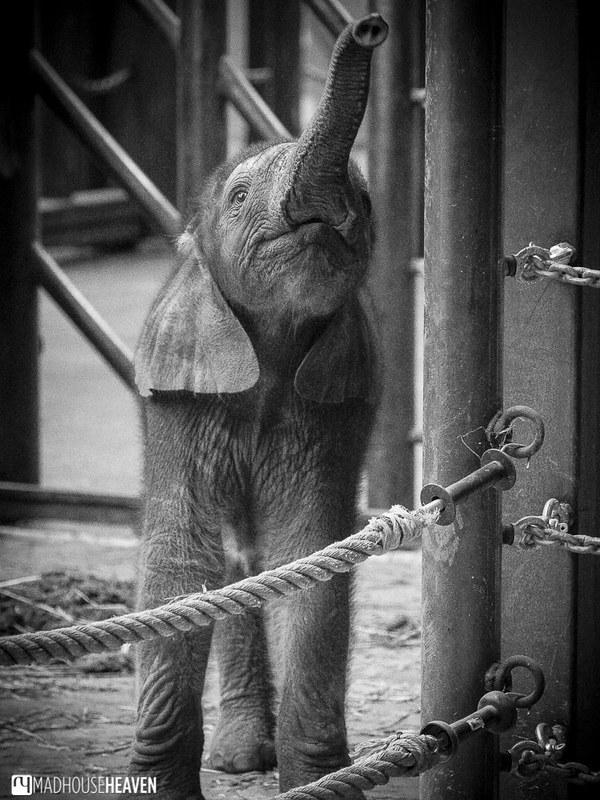 Safaripark Beekse Bergen - 0256