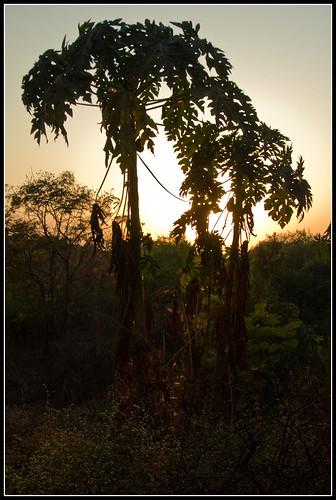 sunset india asia asien sonnenuntergang dusk palm dämmerung mumbai palme indien bombai