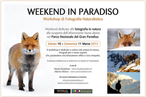 Workshop di Fotografia Naturalistica - 10/11 Marzo 2012 | by Nicola Destefano - Wildlife Photography
