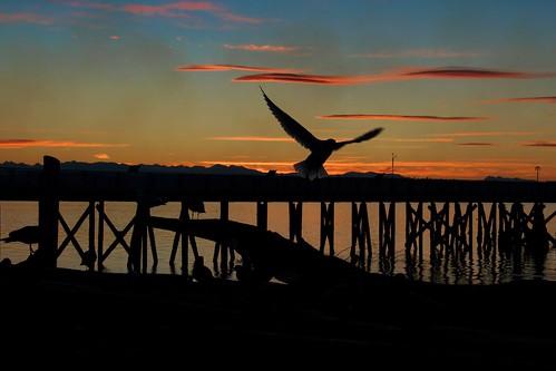 sunset reflection water pier seagul snohomish olympicmountains cloudskayak