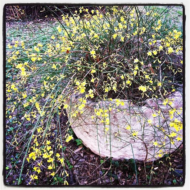 Fiori Gialli In Primavera.Primi Fiori Gialli Primavera Spring Anna Maria Simonini Flickr