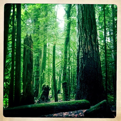 park tree forest bc cathedral grove britishcolumbia macmillan provincialpark cathedralgrove iphone macmillanpark hipstamatic