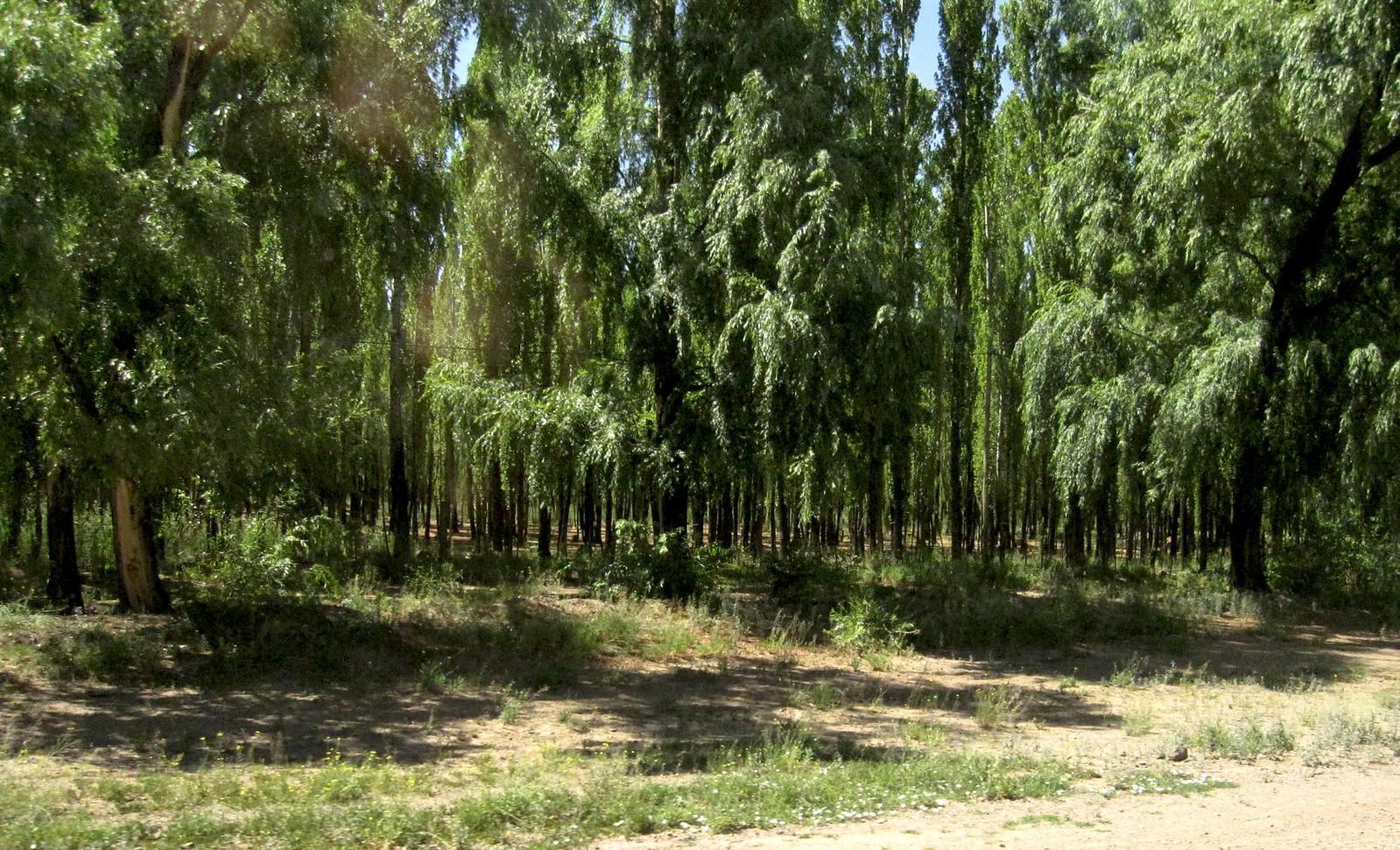Mendoza 295