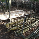 Coppiced products