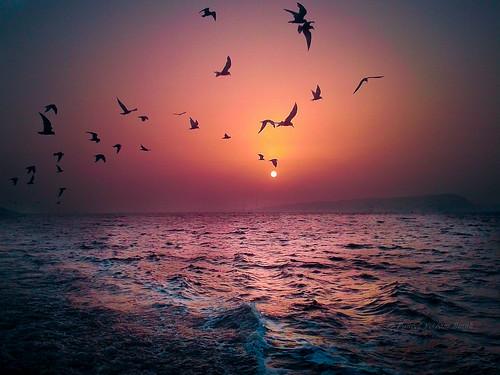 sea birds samsung mumbai silhoutte lightroom windowsphone elephantaislands mango75 omniaw