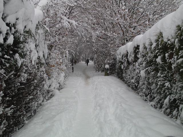 snow sheffield snow 2010