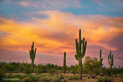 sunset arizona cactus sky southwest art nature phoenix beautiful clouds sunrise landscape scenery colorful desert tucson scenic views scottsdale saguaro sonoran epic hdr jamesinsogna