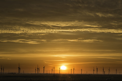 uk sunrise landscape sheep cambersands eastsussex windturbines canoneos6d ratherdistrict
