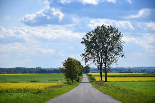 jeżów popień łódzkie lodzkie polska poland nature landscape view canola fields yellow green trees sky clouds road path countryside weather cold windy blue ♡