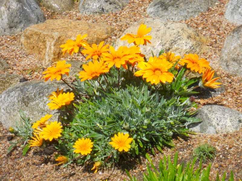 Jardin con plantas y piedra decorativa 4