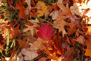 Fall leaves 0635 | by Joanna Lee Osborn