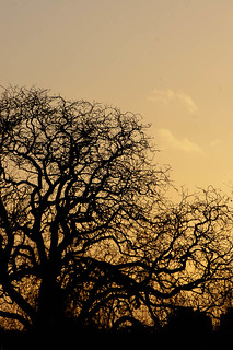 Tree Branches at Dusk
