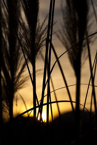 grass sunrise nc north carolina pampas waxhaw ghholtphotography