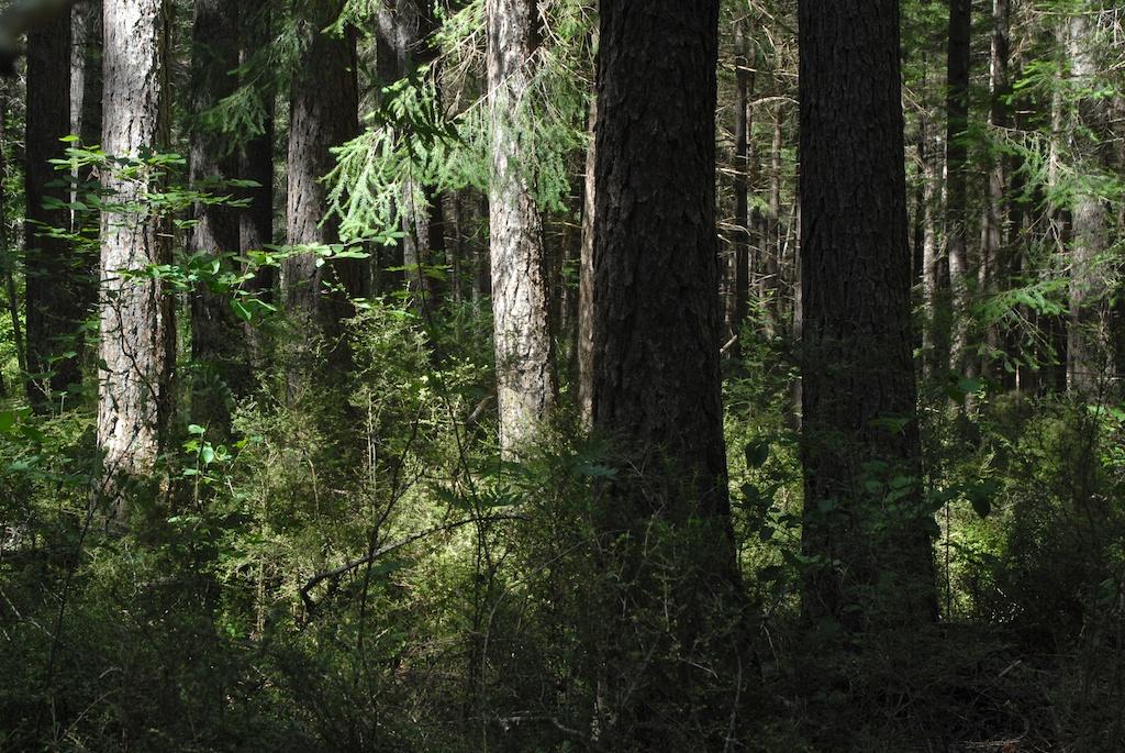 hanmer springs forest walk