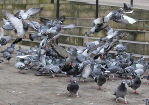 Doves   by Shoneta