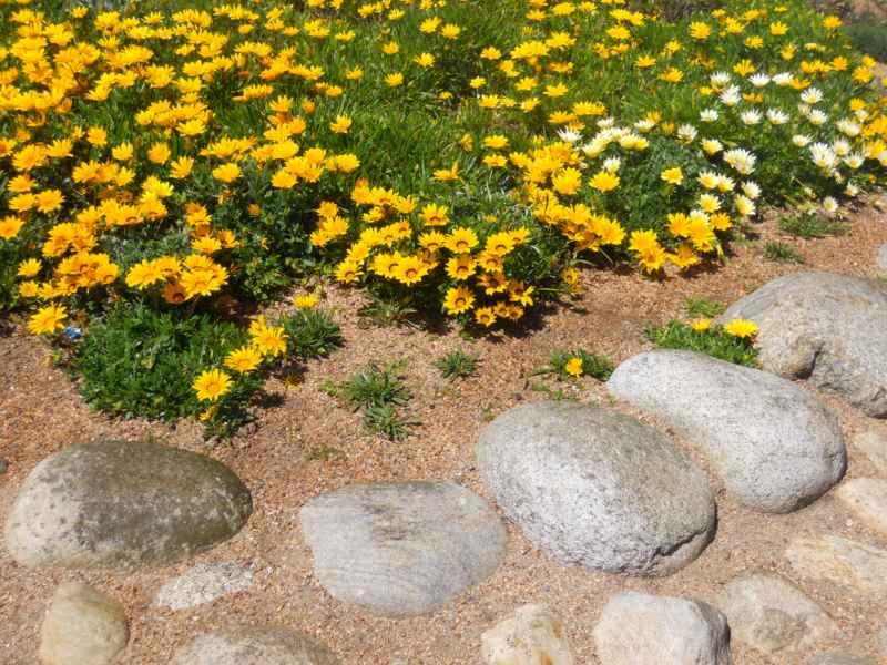 Jardín con plantas y piedra decorativa 3