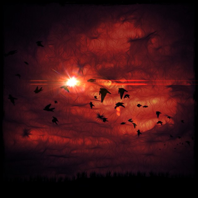 Birds in the Red Sky