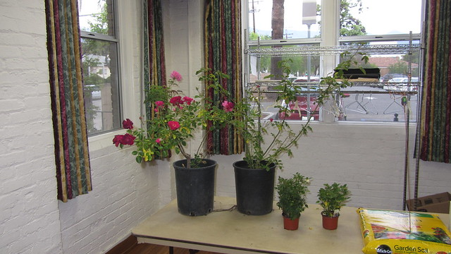IMG_9296 SBRS raffle table roses