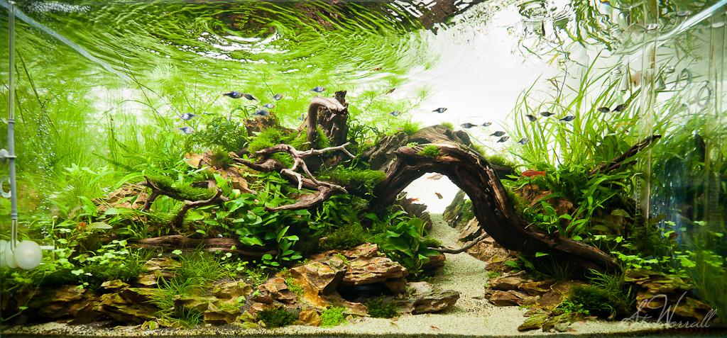 90x45x45cm Planted Dragon Stone Aquascape Full Frontal