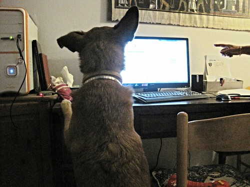 Explaining the finer points of Google Analytics to the dog | by @CyprusPictures