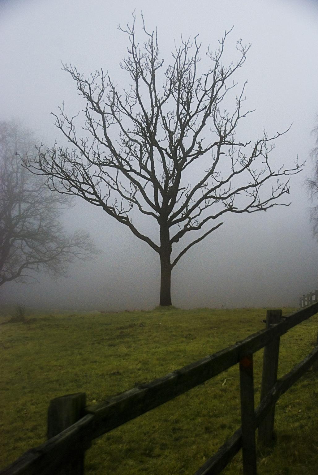 Treesome fog time