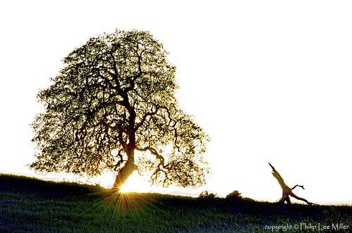 california sunset nature grass landscape sunburst oaktrees arastraderopreserve d7000 magicunicornverybest topazdetail