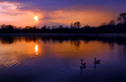 sunset lake canada color bird nature saturated michigan annarbor goose utata waterfowl blown