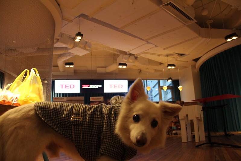 TED dog