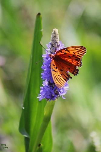 butterfly circlebbarreserve