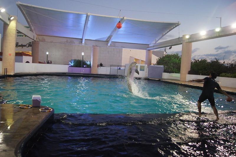 Espectáculo de Delfines