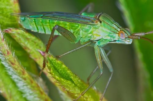 macro nature animal closeup fauna insect bugs 141 k5 macrophoto extensiontube serangga 14x smcpentaxdfamacro100mmf28wr pentaxk5 hishammarmincom hishammarmin af160fcautomacroringflash