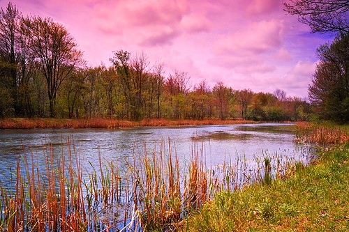 park lake ny newyork nature water clouds pond buffalo birdsong trail filter swamp polarizer cloudysky yellowblue naturetrail orchardpark cokin polarizingfilter gradnd buffaloniagara varicolor gradualneutraldensity birdsongpark