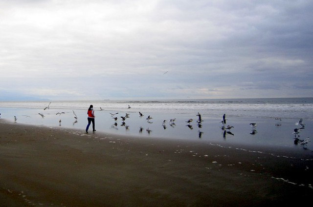 Stinson beach 2011
