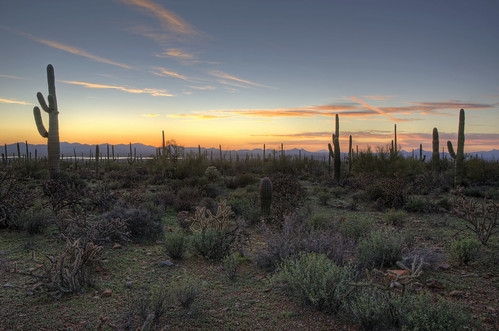 light sunset arizona cactus mountains nature clouds cacti landscape evening scenery shadows sundown dusk peaceful calm valley serene saguaro saguaronationalpark 2012 coth supershot naturesgarden tucsonmountaindistrict absolutelystunningscapes damniwishidtakenthat coth5 dailynaturetnc12