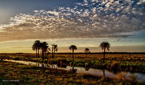 florida sunset sundown bright sky skies birds palms wetland marsh landscape centralflorida lakewoodruff lakewoodruffnationalwildliferefuge wildliferefuge palmtrees trees clouds reflections reflection horizon