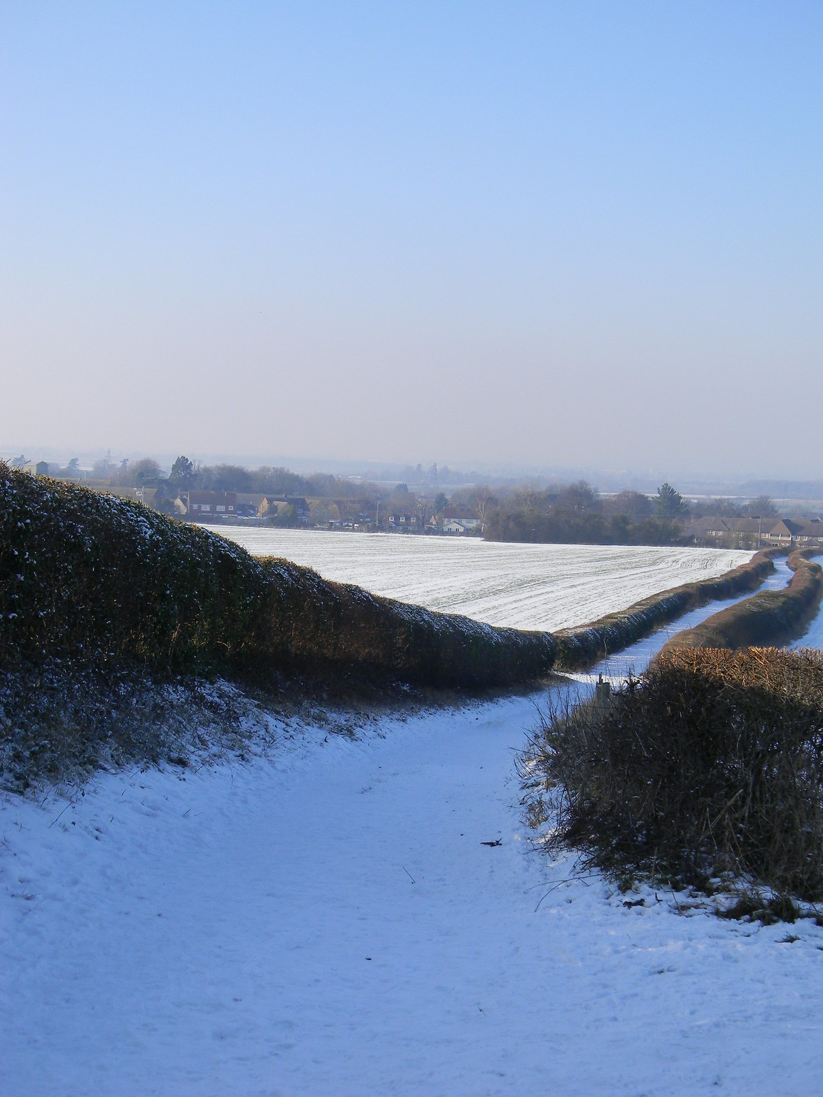Hedgerows Saunderton to Bledlow