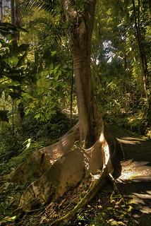 Forrest, Barbados