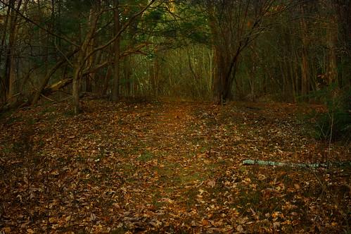 trees winter nature leaves fairytale forest dark landscape lost woods pennsylvania path atmosphere pathway hanselandgretel driedleaves