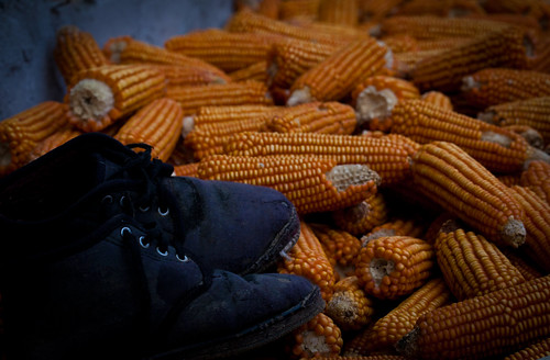 The cobbler and the corn cobs