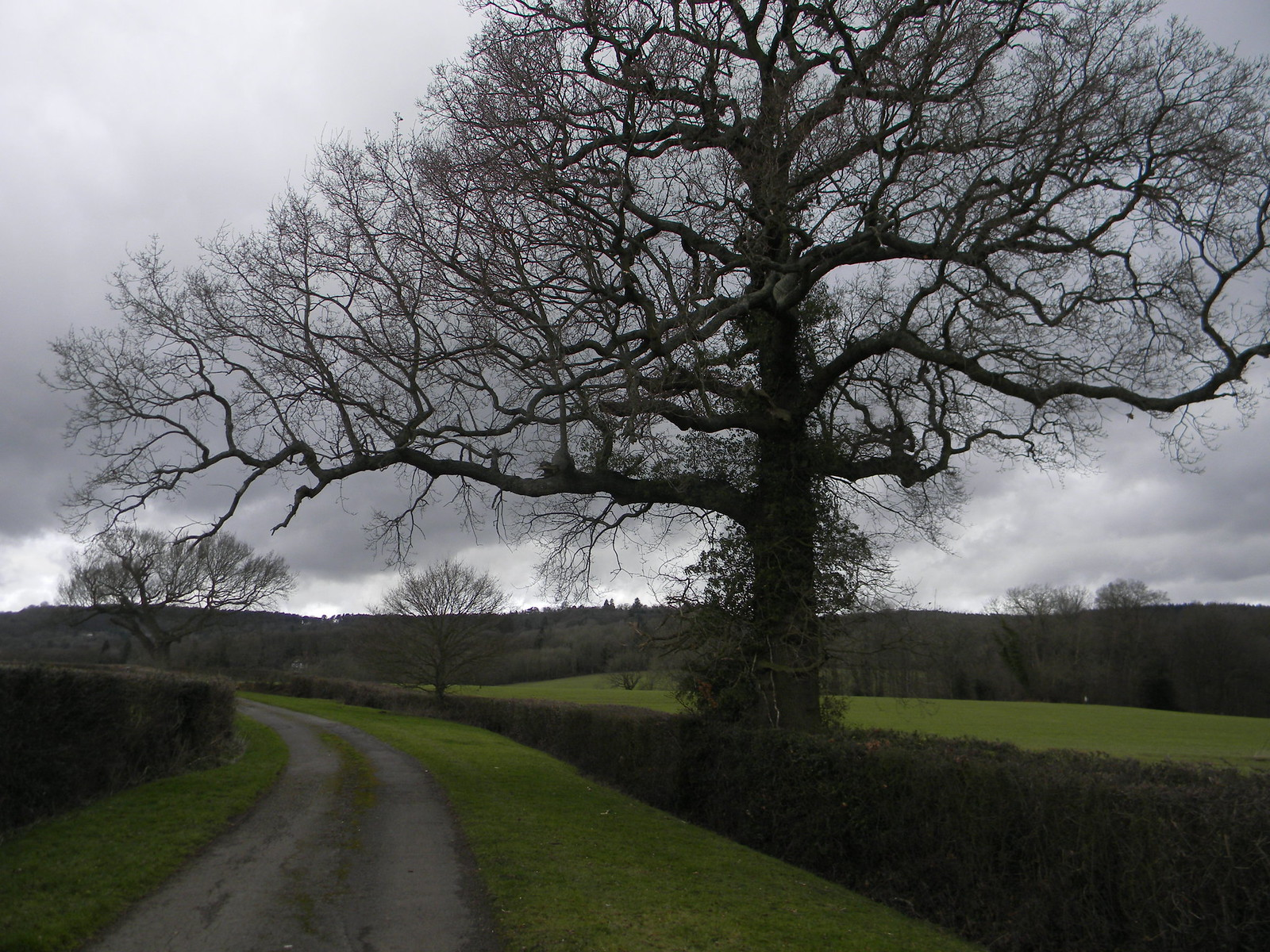 Big Tree Holmwood to Gomshall